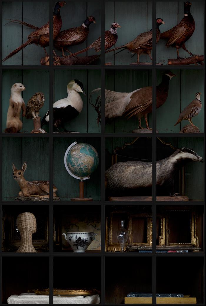 Cabinet Curiosity