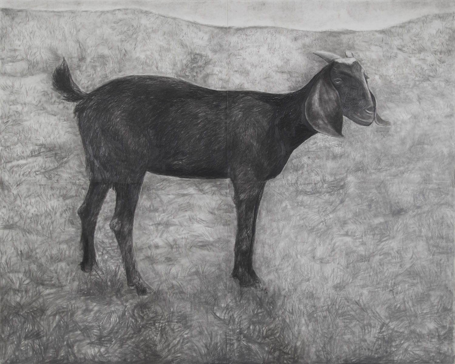 Black Goat in Landscape