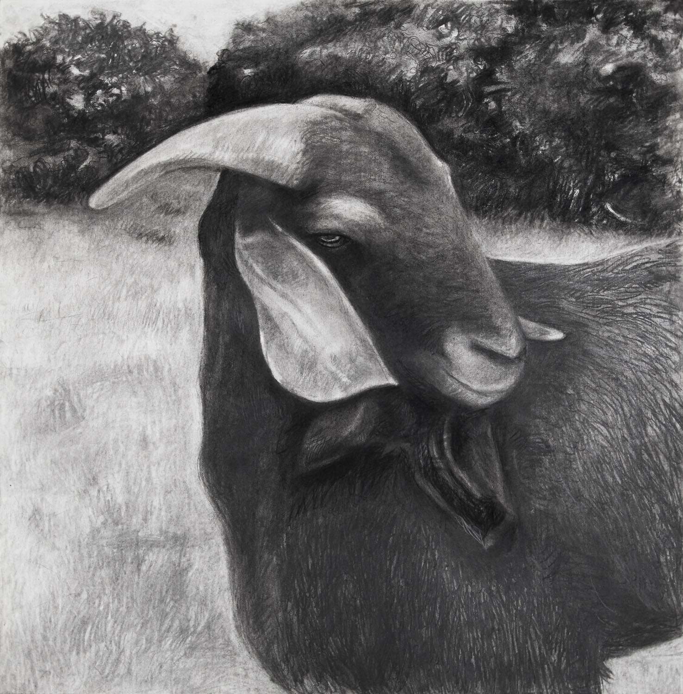 Elegant Goat in Landscape