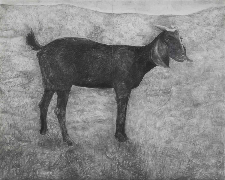 Black Goat in Landscape