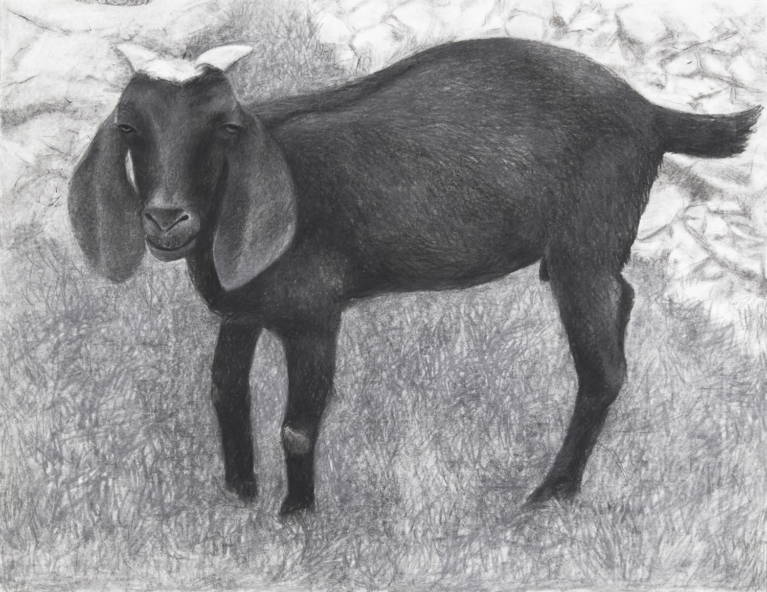 Black Goat in the Afternoon