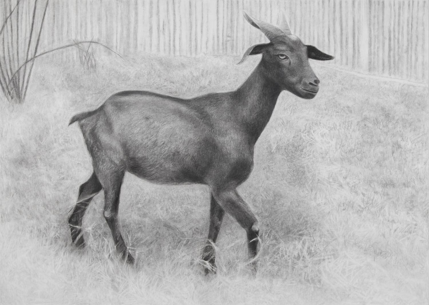 Black Goat of Relax Time